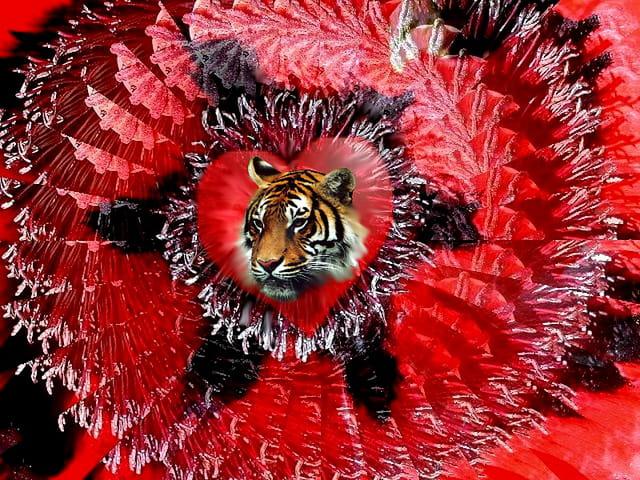 Coeur de lion , oups de tigre ...