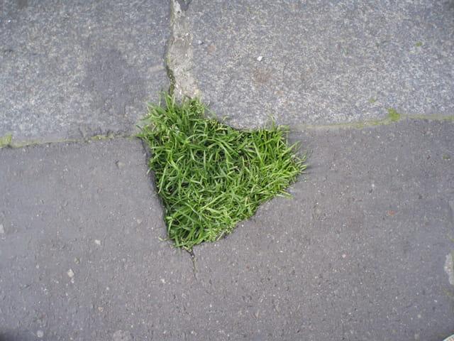 Coeur de verdure