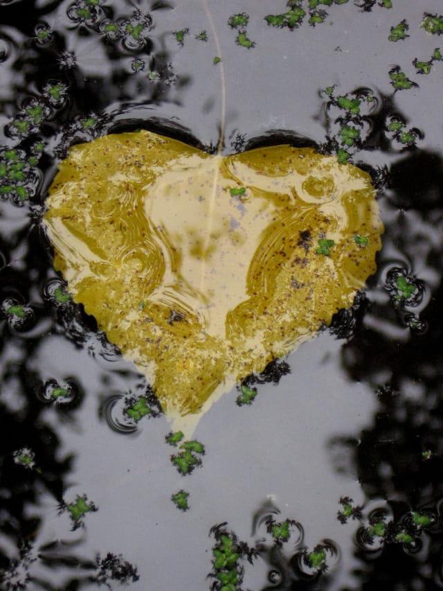 Coeur-feuille