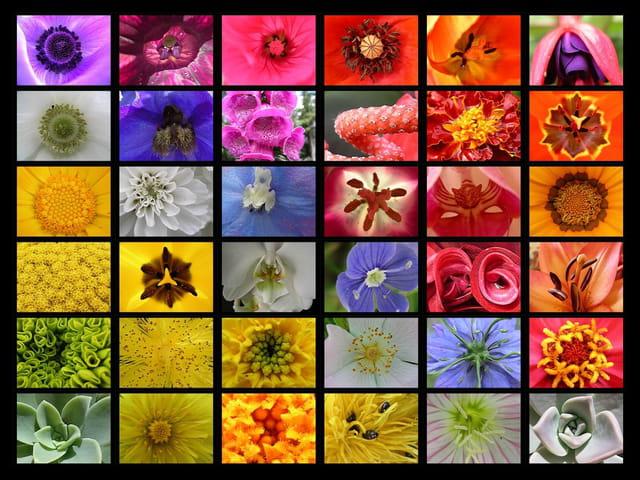 Coeurs de fleurs arc en ciel