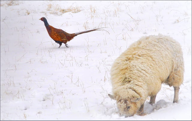Cohabitation hivernale....