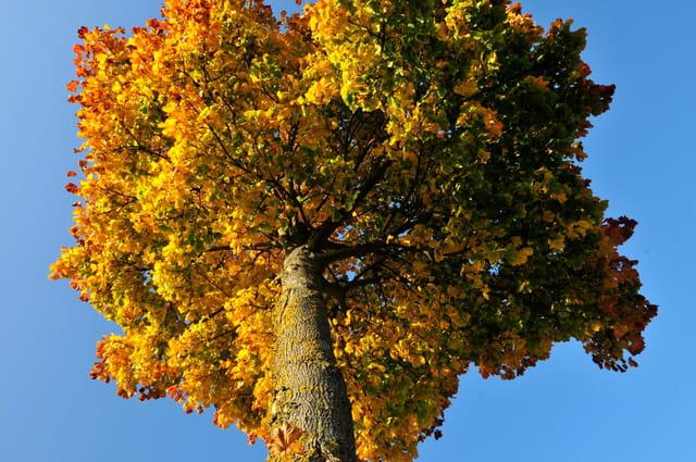 coiffure éphémère d'automne