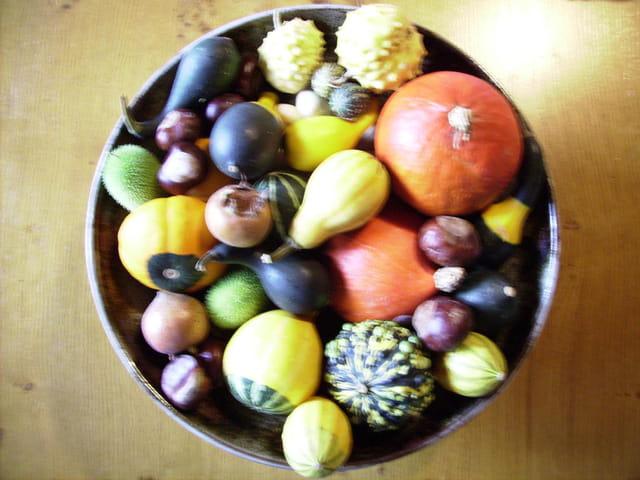 Coloquintes colorées