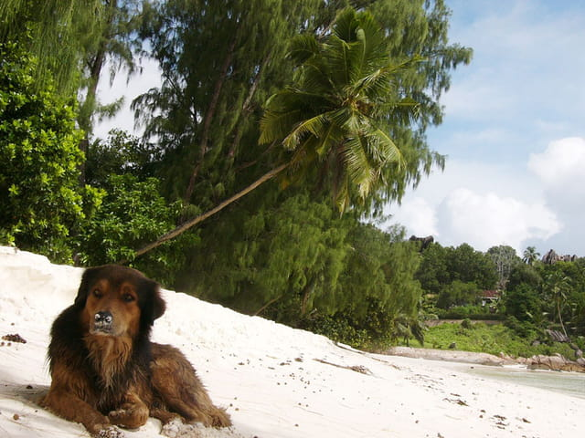 Compagnon de plage