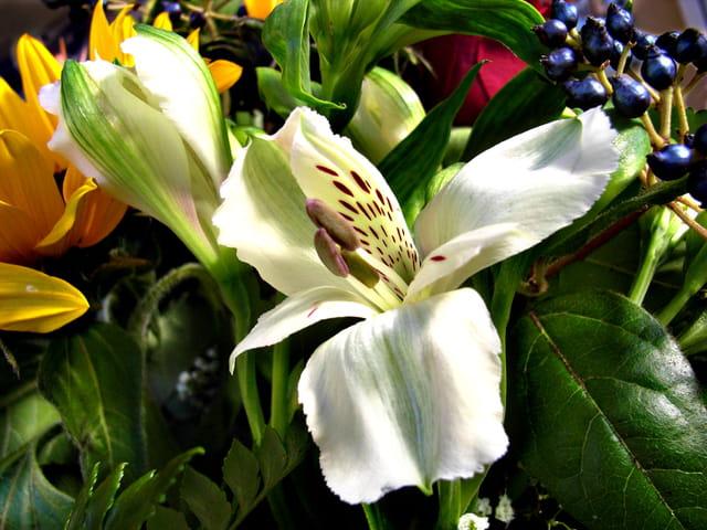 Composition florale au lys
