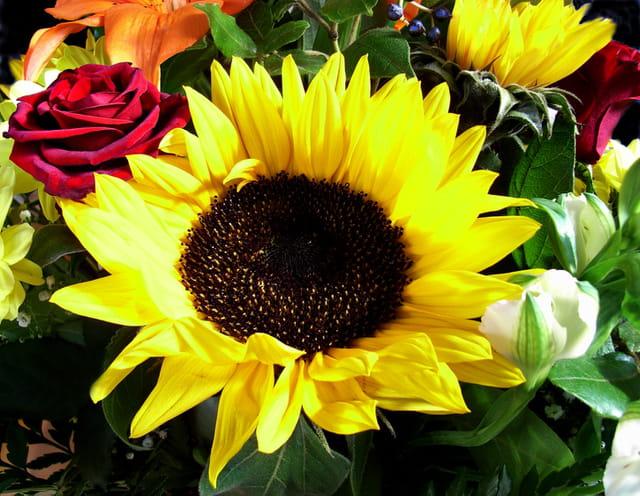 Composition florale au tournesol