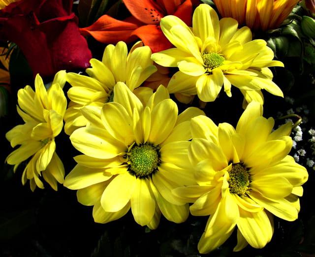 Composition florale aux asters