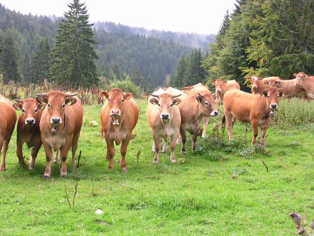Concerto pour un troupeau