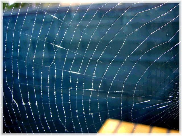 Perles de lumière sur toile d'araignée
