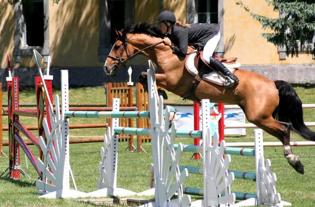 Concours  international poneys