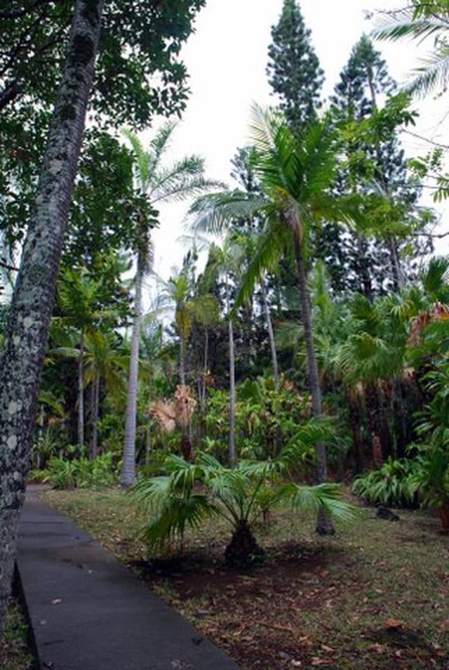 conservatoire botanique de Mascarins de Saint Leu