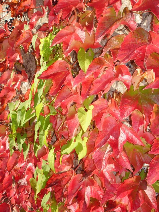 Contrastes d'automne