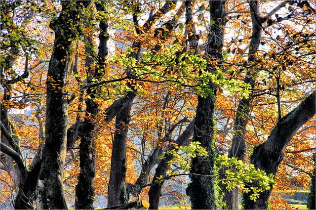 Contre jour en automne.