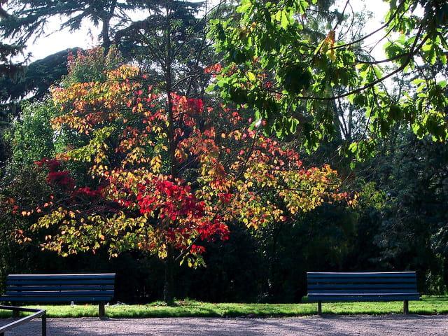 Contre jour en automne