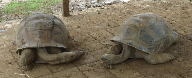 Conversation de tortues