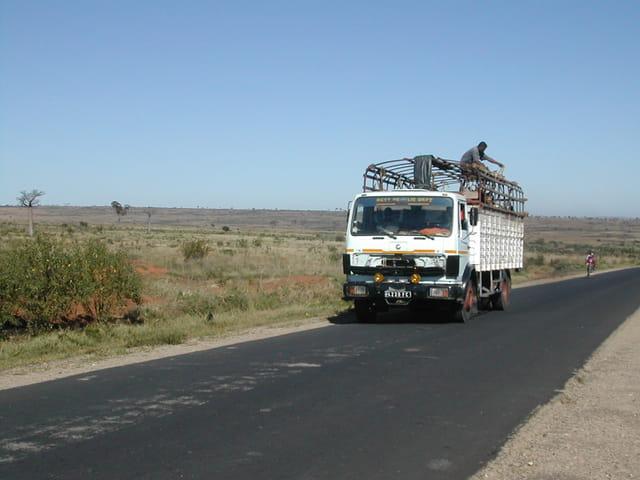 Convoi de Zébus