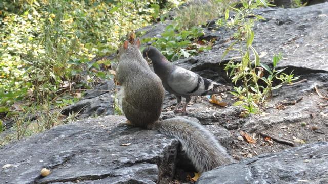 Copain comme écureuil et pigeon !