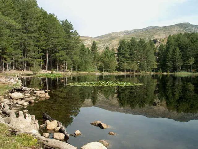 Corse lac creno