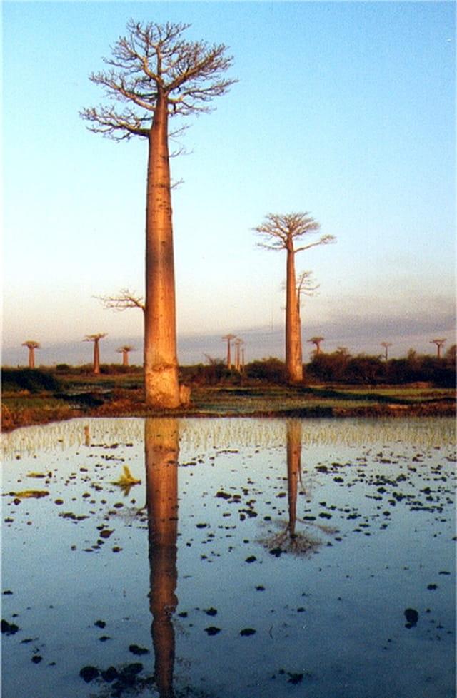 Coucher de soleil à baobab-land