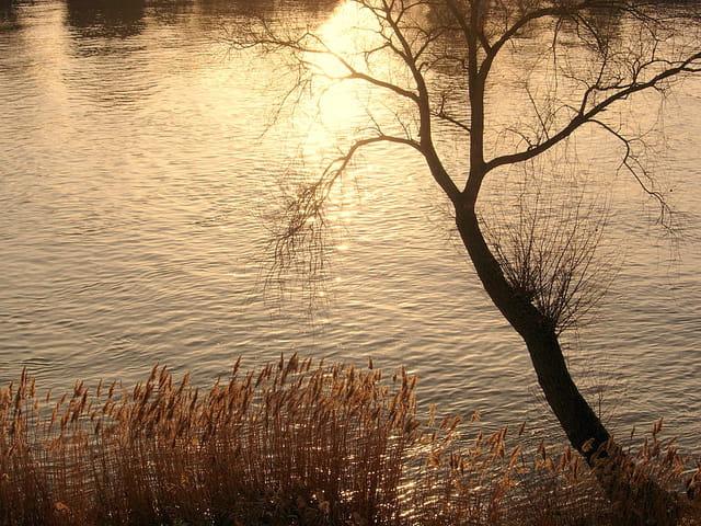 Coucher de soleil au bord de seine