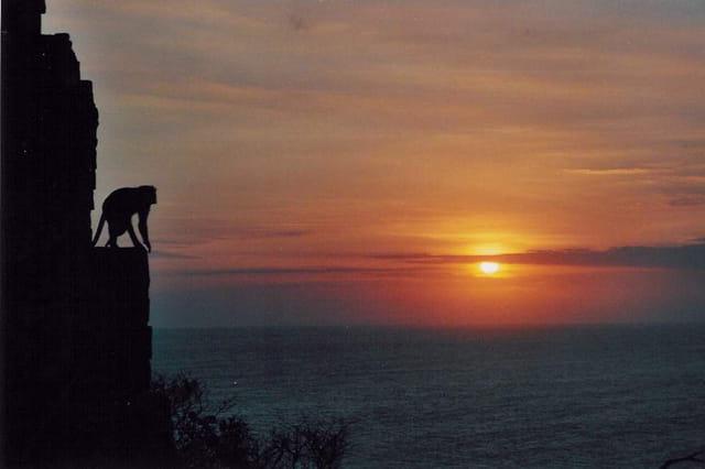 Coucher de soleil au singe