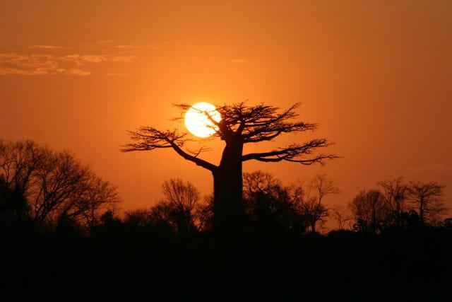 Coucher de soleil sur les baobabs