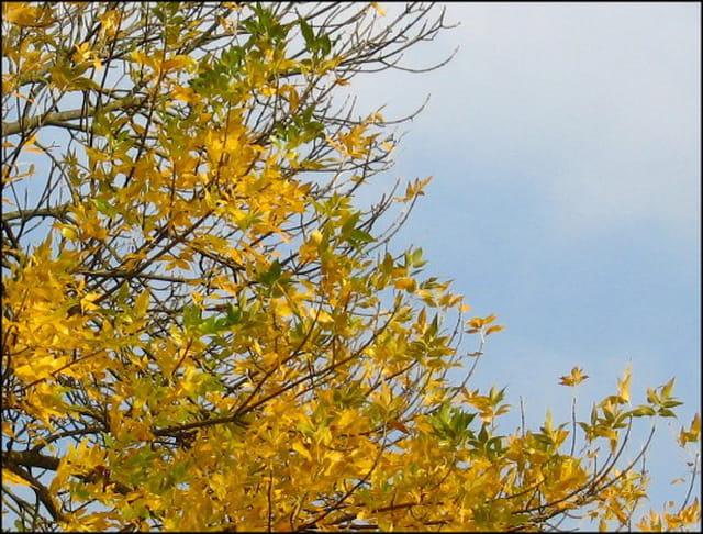Couleur  d\' automne