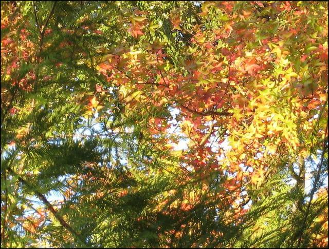 Couleur d'automne au jard