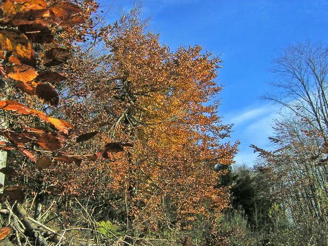 Couleurs d'automne et ciel bleu