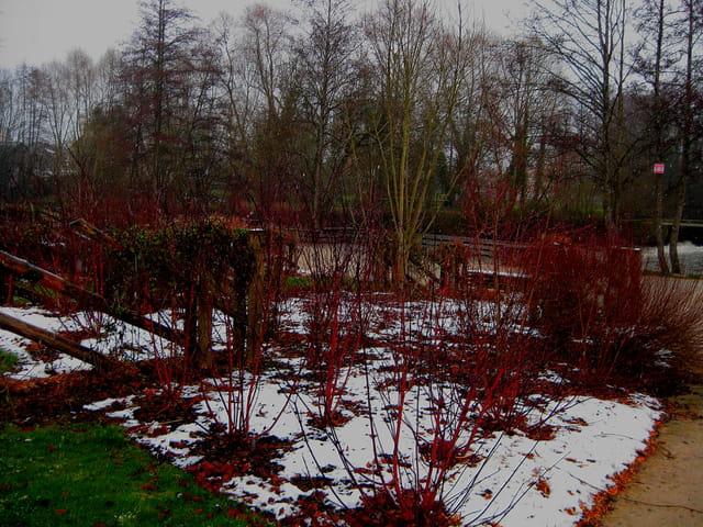 couleurs hivernales