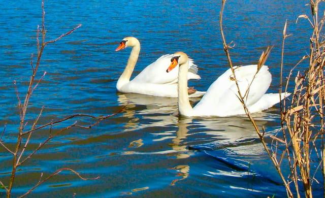 Couple paisible au fil de l'eau