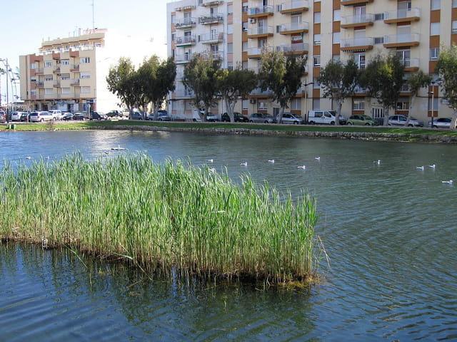 Cours d'eau en ville (6)