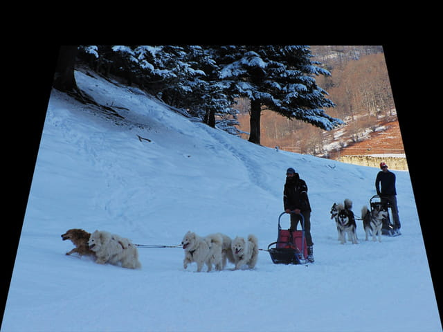 Course de chiens de traineaux.