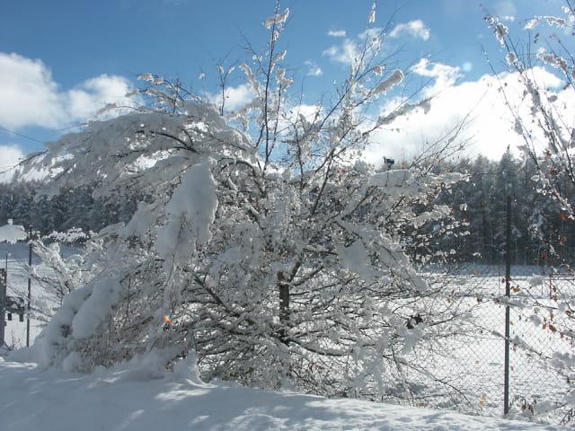 Couvert de fleurs de neige