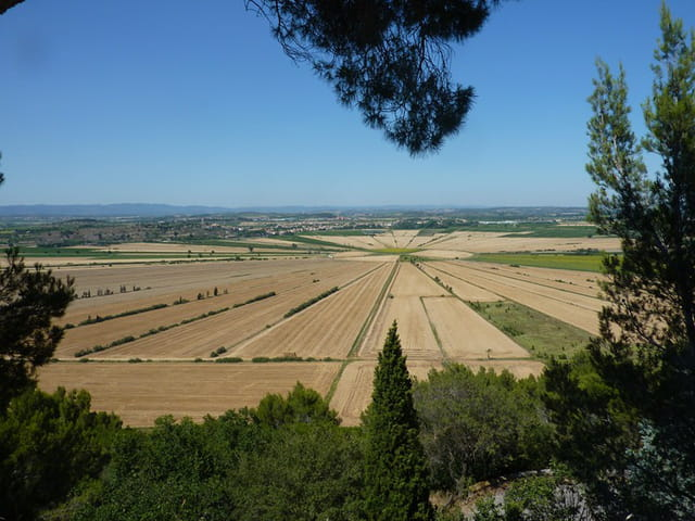 Cultures en forme de soleil ( Hérault )