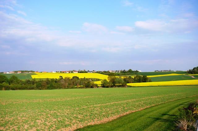 Cultures en jaune et vert