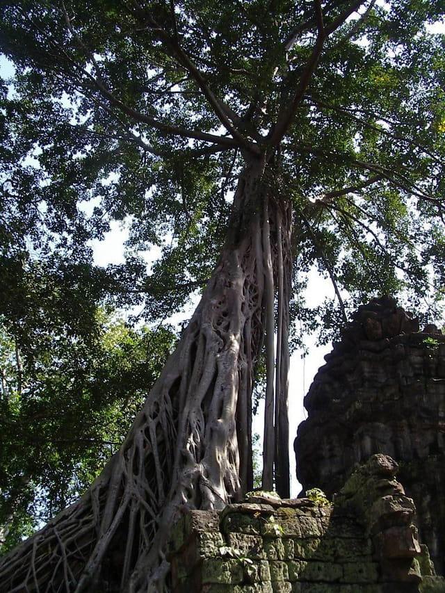 curiosités du Cambodge