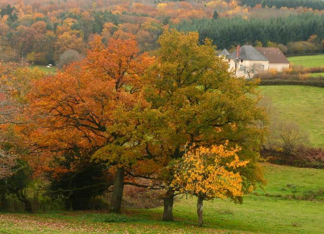 D'autres couleurs d'automne