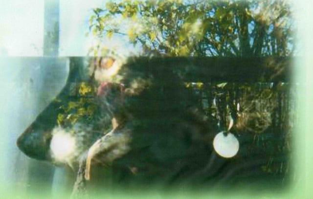 Dady derrière sa fenêtre