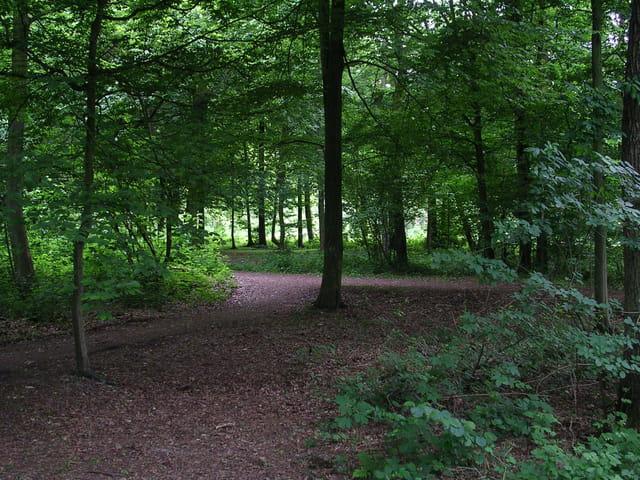 Dans le silence de la Forêt.