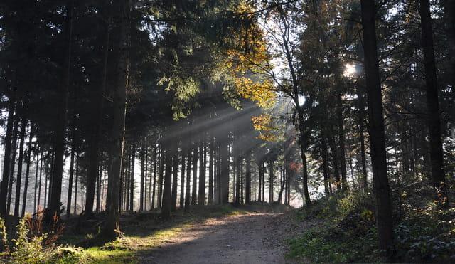 Dans les forêts du Jorat