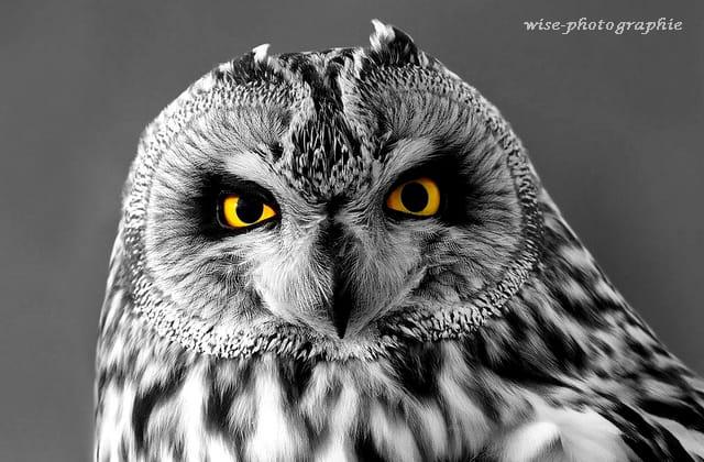 de chouette yeux
