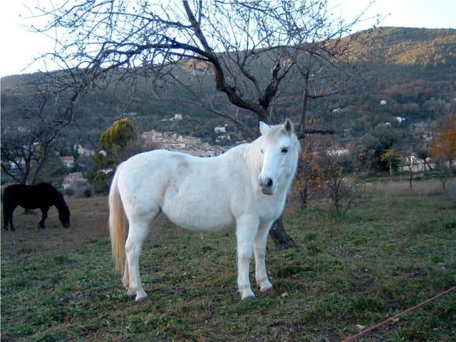 De si jolis chevaux
