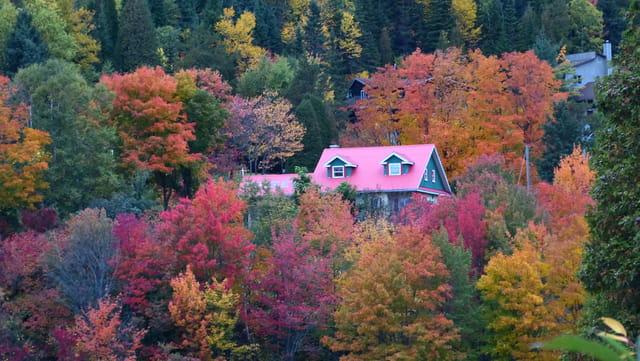 Débauche de couleurs dans la foret canadienne
