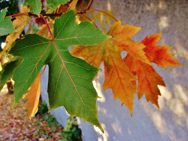 déclinaison d'automne