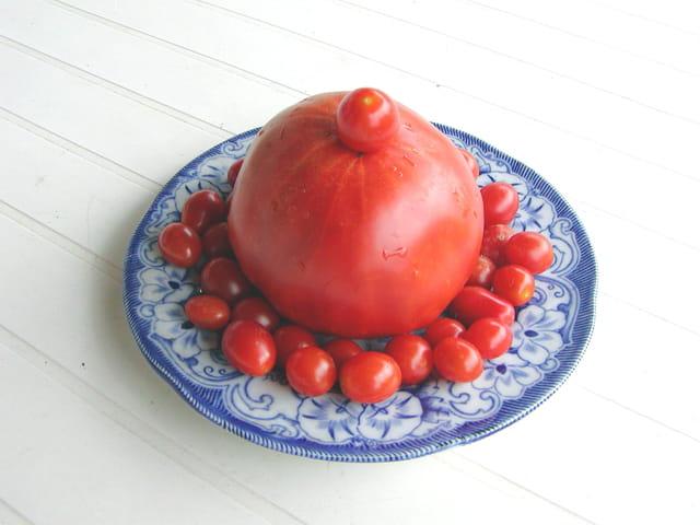 Déco tomates
