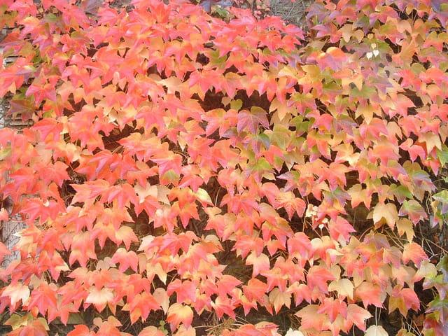 Décor naturel d'automne