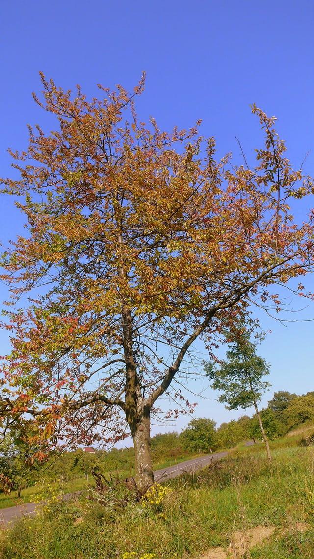 Déjà les couleurs d'automne