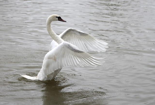 -- Déployer ses ailes --