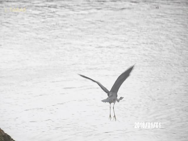 Déployer ses ailes